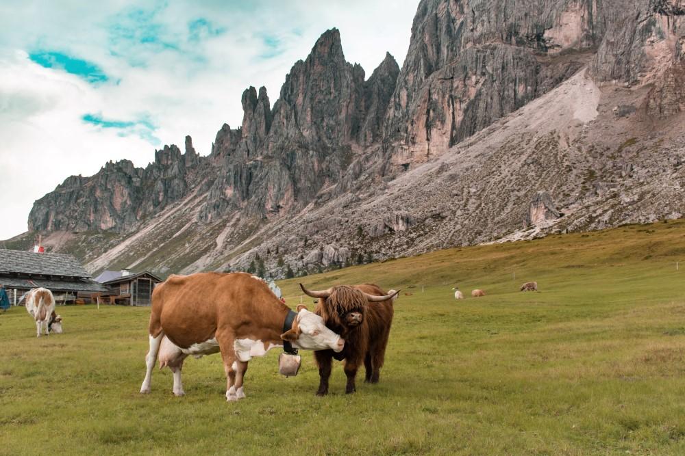 Passo-delle-Erbe-Trentino-Alto-Adige