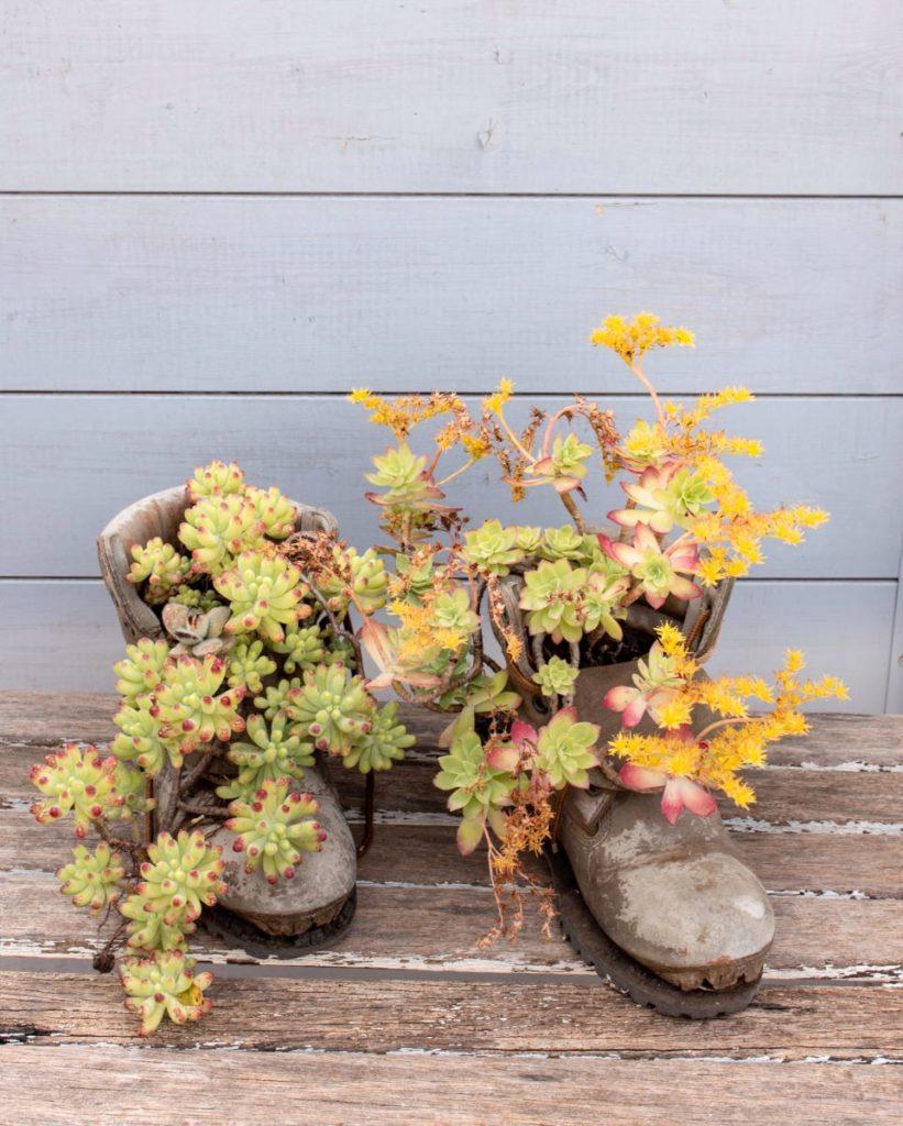 fiori-masseria-modica