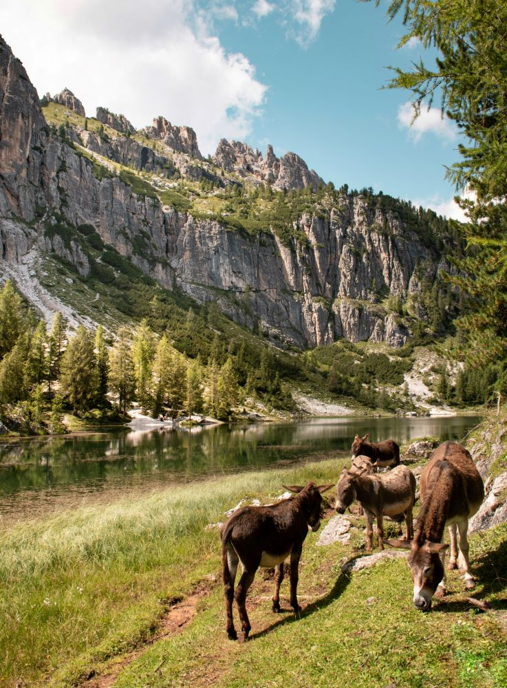 lago-federa-animali-al-pascolo