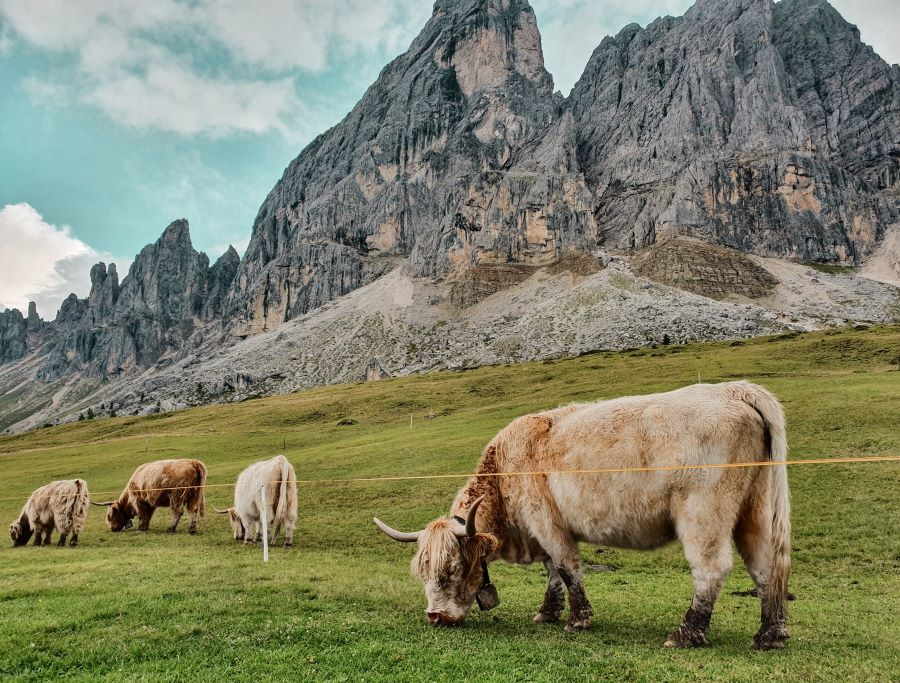 alpe-di-luson-trekking
